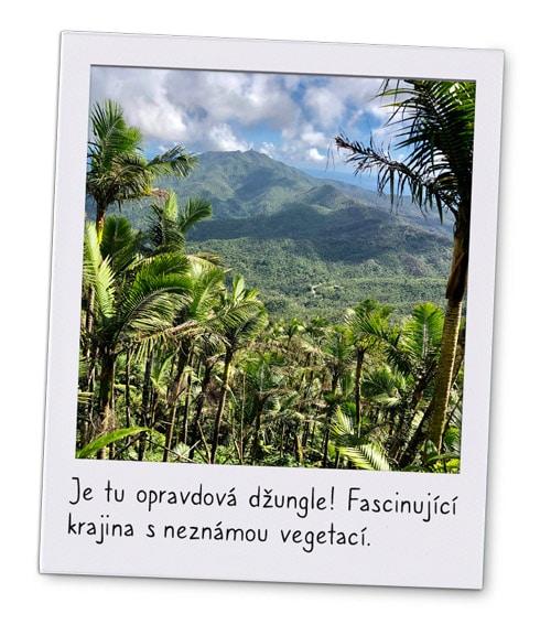 Pohled na džungli Portorika